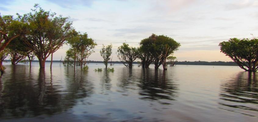 The Amazon (photos)