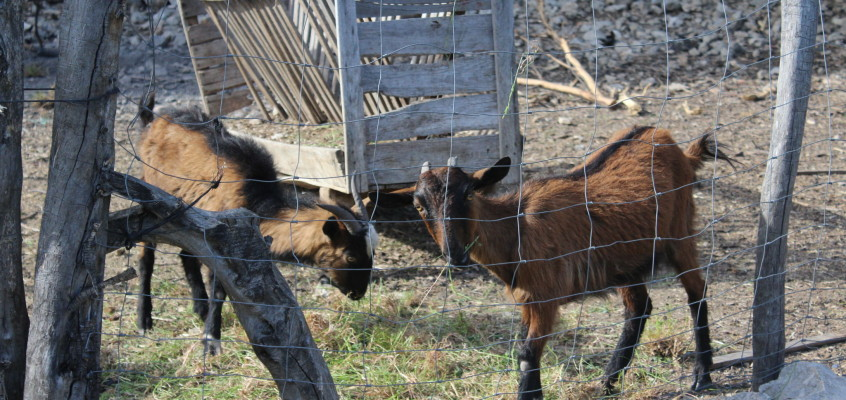 Our WWOOF Stop: A Tour of the Farm (Video Here)